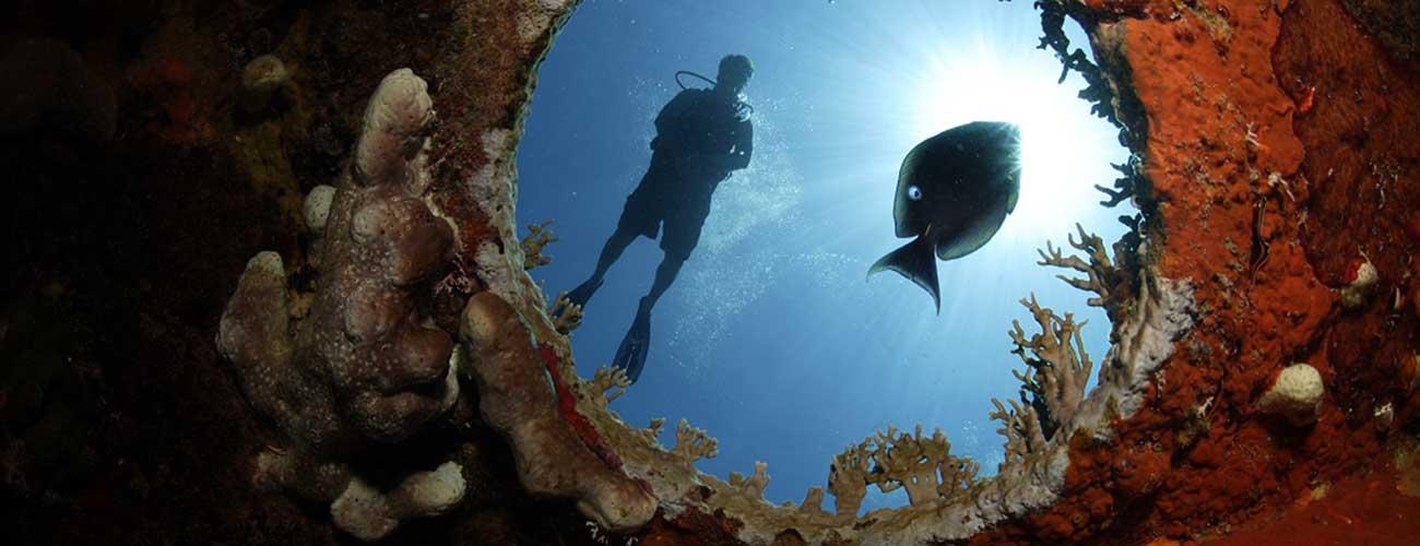 Porthole diver
